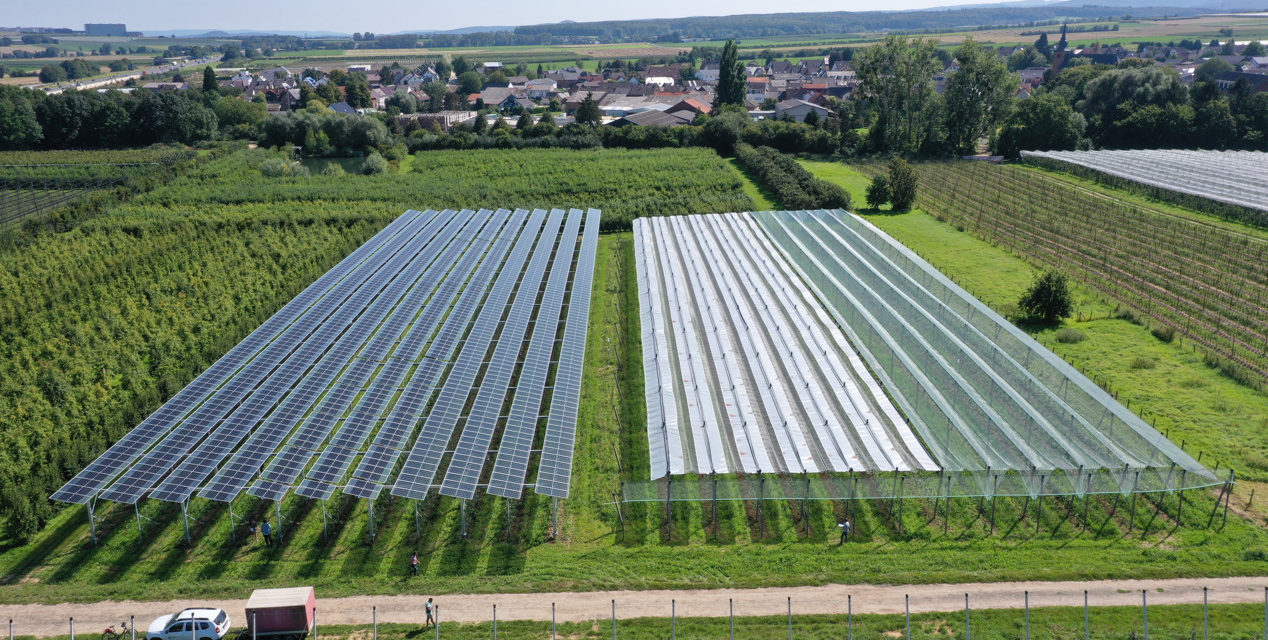 BayWa r.e. and Fraunhofer ISE with first Agri-PV system for apples in Germany